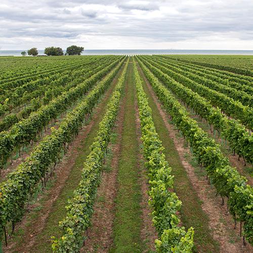 Niagara's Wine Country